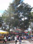 Mercado, Otzolotepec 3