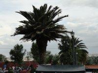Plaza Vireinal_6