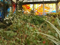Cosmo Vitral Jardin Botanico_20