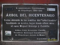 Arbol del Bicentenario