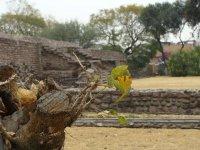 Zona Arqueologica El Conde_4