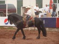 Paseos en la Feria del Caballo 2011 2