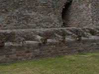 Piramide de Tenayuca 12