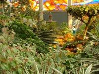 Cosmo Vitral Jardin Botanico_22