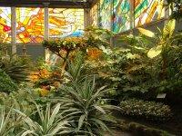 Cosmo Vitral Jardin Botanico_23