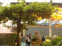 Cosmo Vitral Jardin Botanico_41