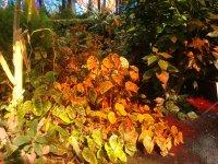 Cosmo Vitral Jardin Botanico_4