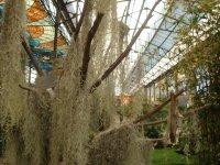 Cosmo Vitral Jardin Botanico_6