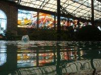 Cosmo Vitral Jardin Botanico_9